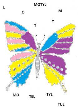motyl kolorowy